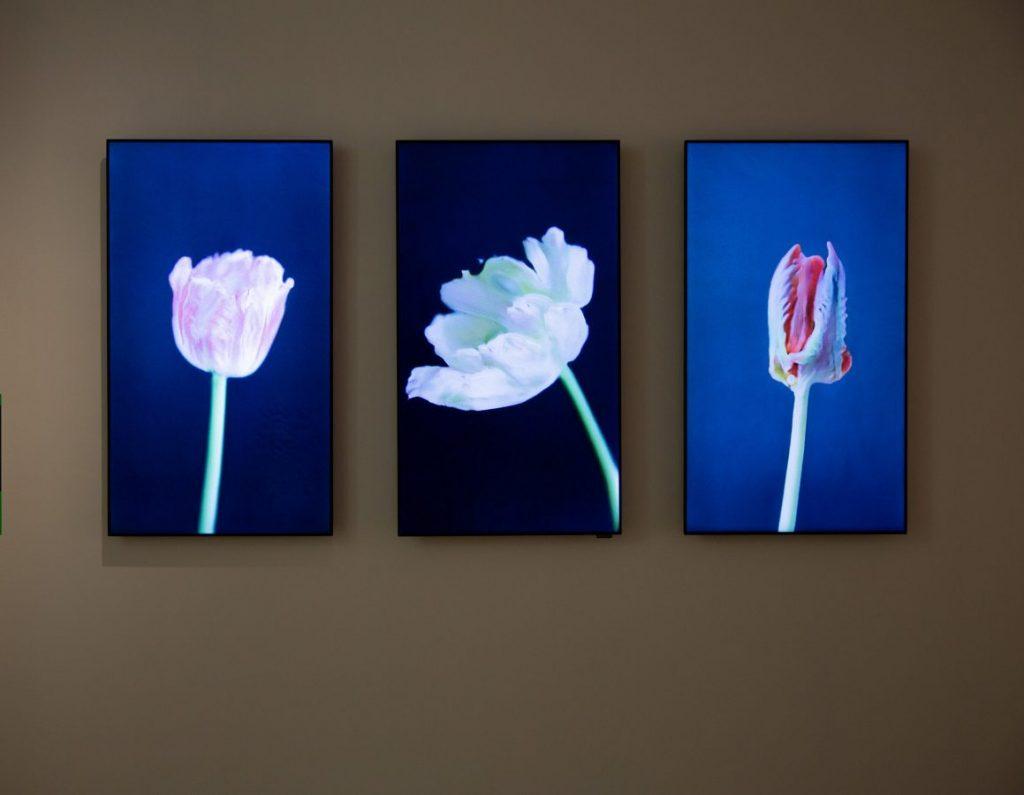 Анна Ридлер «Вирус Мозаики», 2019 Трехканальное видео, инсталляция, машинное обучение © Центр Art & Science Университета ИТМО