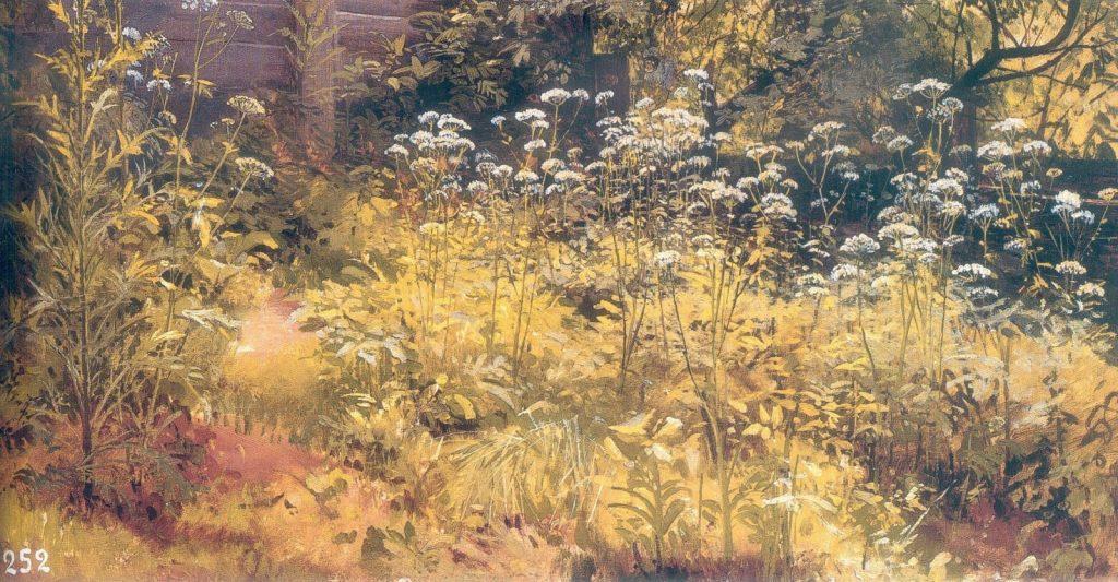 И.И.Шишкин «Сныть трава. Парголово», 1884-5. Этюд. Холст на картоне, масло. 35×58,5 © ГРМ
